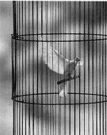 Cage Pauline