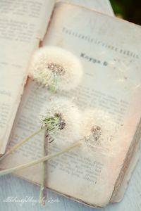 dandelion livre